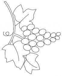 plansa de colorat fructe struguri de colorat p14