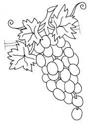 plansa de colorat fructe struguri de colorat p16
