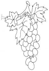 plansa de colorat fructe struguri de colorat p17