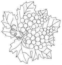 plansa de colorat fructe struguri de colorat p18