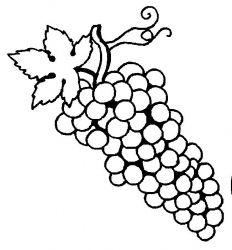 plansa de colorat fructe struguri de colorat p23