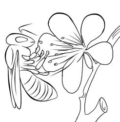 plansa de colorat insecte albinute de colorat p02