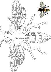 plansa de colorat insecte albinute de colorat p03