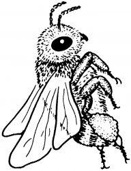plansa de colorat insecte albinute de colorat p12
