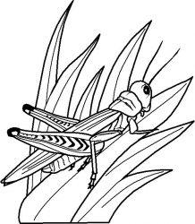 plansa de colorat insecte de colorat p05
