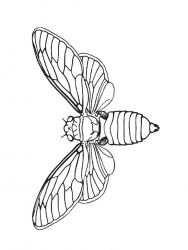 plansa de colorat insecte de colorat p17