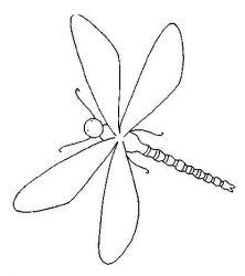 plansa de colorat insecte de colorat p19
