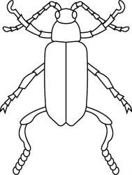 plansa de colorat insecte de colorat p25