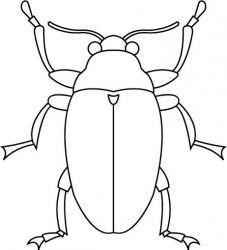 plansa de colorat insecte de colorat p26
