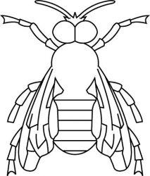 plansa de colorat insecte de colorat p27