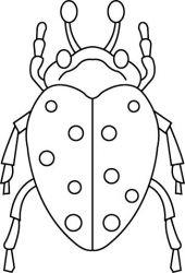 plansa de colorat insecte de colorat p28