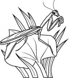 plansa de colorat insecte de colorat p31