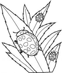 plansa de colorat insecte de colorat p36