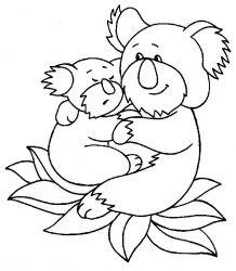 plansa de colorat koala de colorat p04