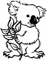 plansa de colorat koala de colorat p06