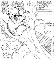 plansa de colorat koala de colorat p07