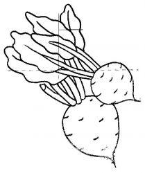 plansa de colorat legume de colorat p02