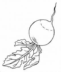 plansa de colorat legume de colorat p07
