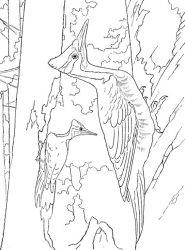 plansa de colorat pasari de colorat p100