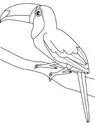 plansa de colorat pasari de colorat p108