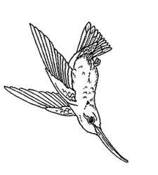plansa de colorat pasari de colorat p18