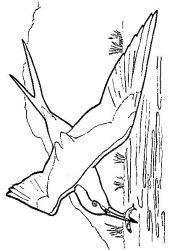 plansa de colorat pasari de colorat p46