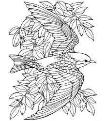 plansa de colorat pasari de colorat p76