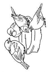 plansa de colorat pasari de colorat p97