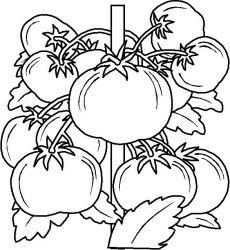 plansa de colorat toamna de colorat p114