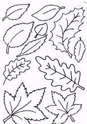 plansa de colorat toamna de colorat p67