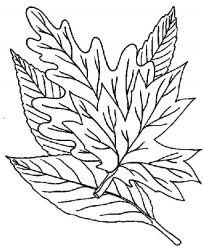 plansa de colorat toamna de colorat p68