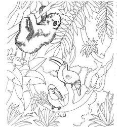 plansa de colorat zoo de colorat p03
