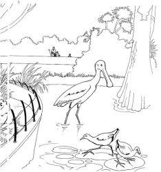 plansa de colorat zoo de colorat p08