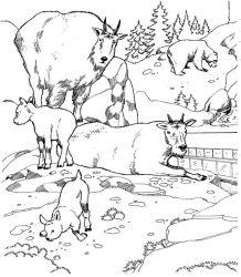 plansa de colorat zoo de colorat p14