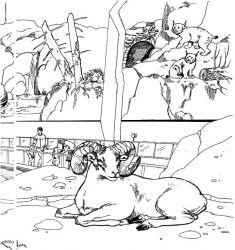 plansa de colorat zoo de colorat p21