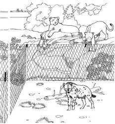 plansa de colorat zoo de colorat p23
