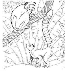 plansa de colorat zoo de colorat p24
