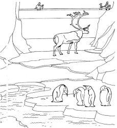 plansa de colorat zoo de colorat p26